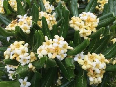 maribuflower.JPG