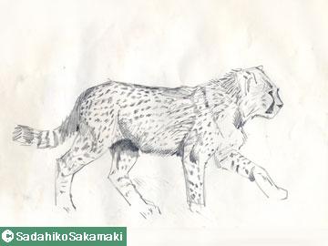 スケッチ(1)ヒョウ、ジャガー