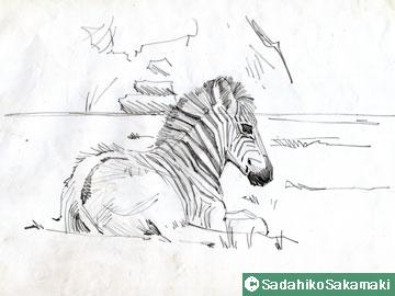 スケッチ(3)シマウマ、ゼブラ