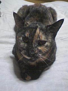 2010年9月中旬のサビ猫くるん1