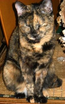 2011年9月22日のサビ猫くるん(2)