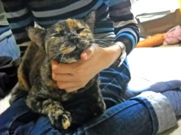 2011年9月25日のサビ猫くるん(4)