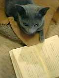 読書する蓮