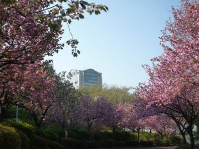 春・パステルのキャンパス