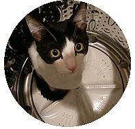 洗濯機の中のまめ