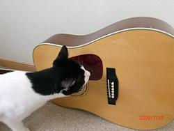 ギターの匂いをかぐまめ