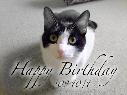 誕生日おめでとう!まめ