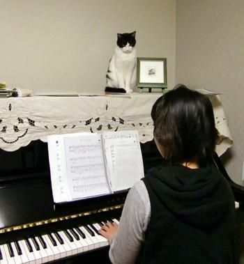 ピアノの上のネコ