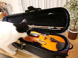 ネコとバイオリン