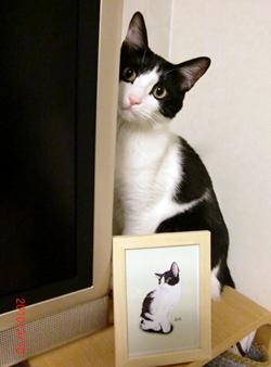 テレビ台の上のネコ
