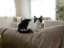ソファの背もたれのネコ