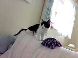 ソファの背もたれの上の子猫