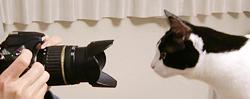 Nikon D300をのぞくネコ