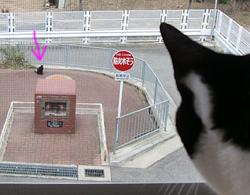 黒猫を見る白黒ネコ