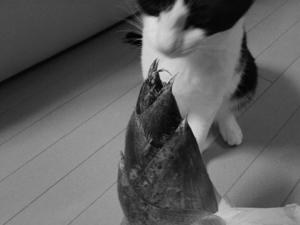 タケノコと猫