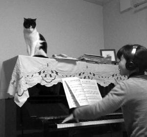 ピアノの上のねこ