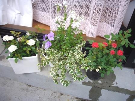 お庭のお花たちです