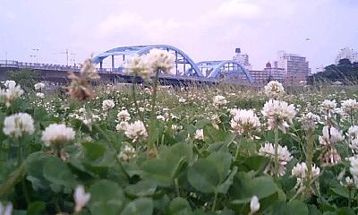跨線橋とシロツメ草