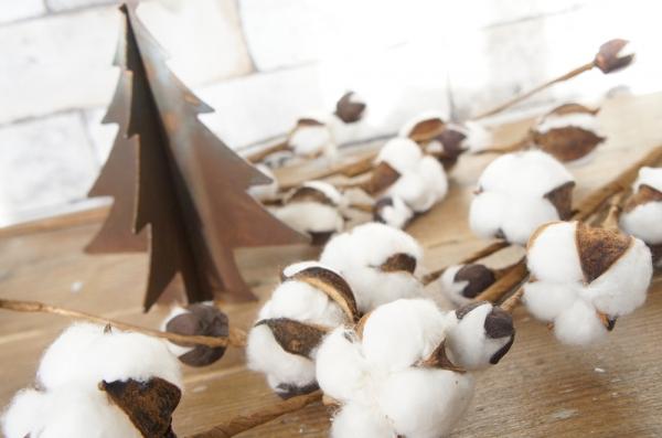 cotton2.jpg