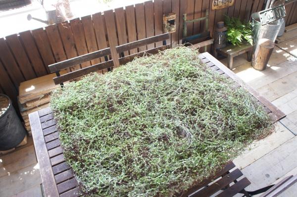 大きなグリーンマット