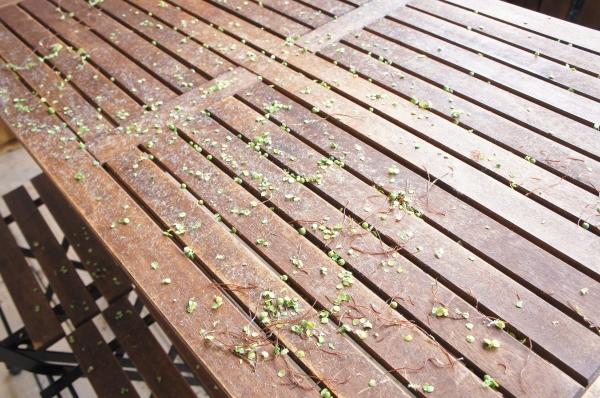 テーブルに散らばる葉っぱ.jpg