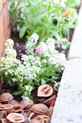 お花を植えて華やかに