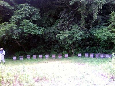 四国の蜂蜜