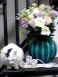 rencalovesflowers