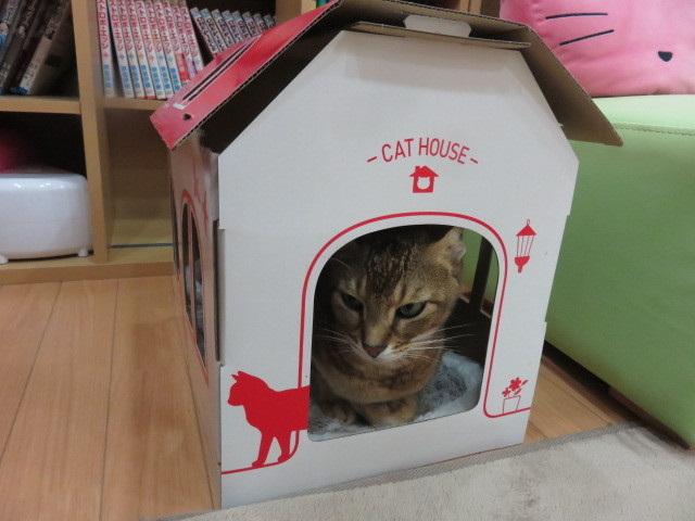 マッハポリス〜in the box〜 1