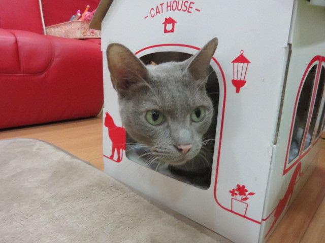 マッハポリス〜in the box〜 13