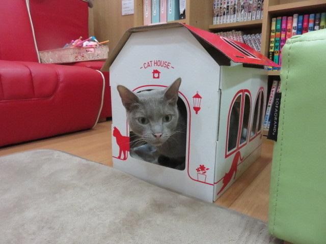 マッハポリス〜in the box〜 14