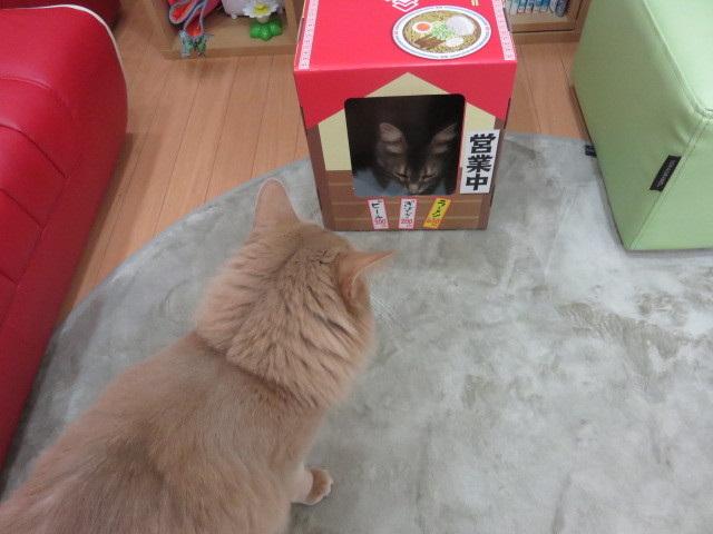 にゃー麺屋さん6