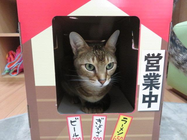 にゃー麺屋さん7