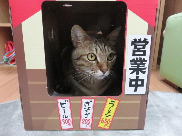 にゃー麺屋さん10