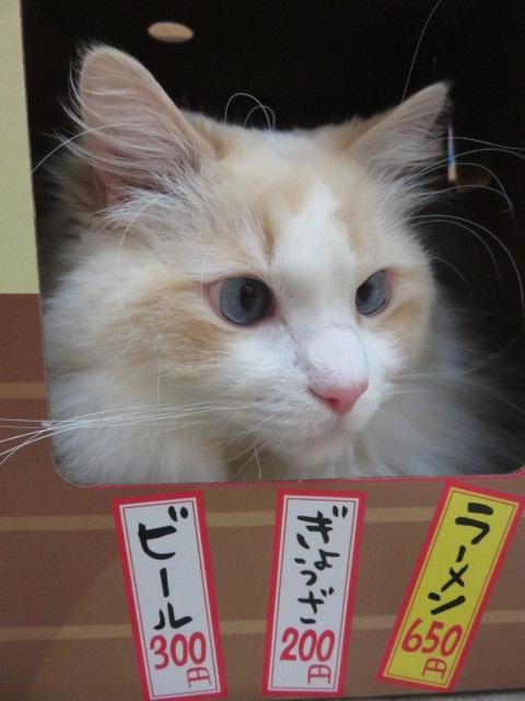 にゃー麺屋さん11
