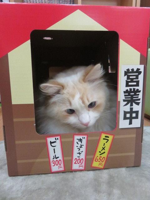 にゃー麺屋さん12