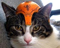猫のヘルメット