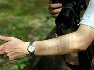 ウラギンシジミを撮る腕