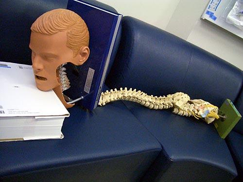 Ambuくんの脊椎