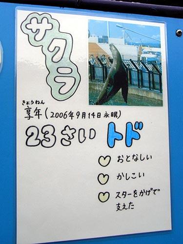 室蘭水族館06サクラ
