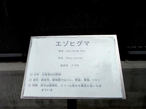 姫路06エゾヒグマ看板