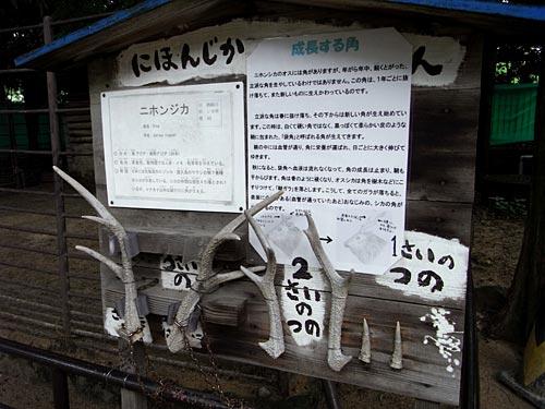 姫路11ニホンジカ
