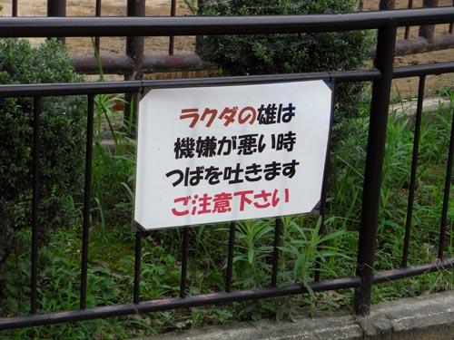 姫路12ラクダに注意