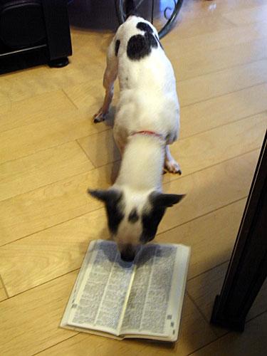 コトラと英和和英辞書
