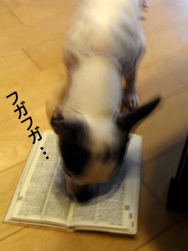 レフラー球を食べる犬