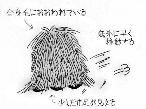 ゴマキヒトデ1