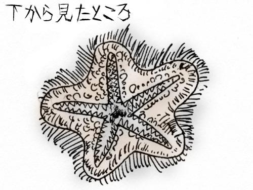 ゴマキヒトデ2