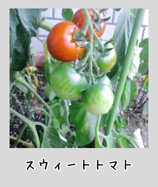 100704_1831~010002.jpg