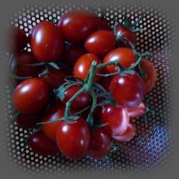 プチトマト7-28