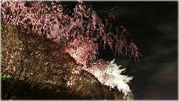 嵐山・夜桜